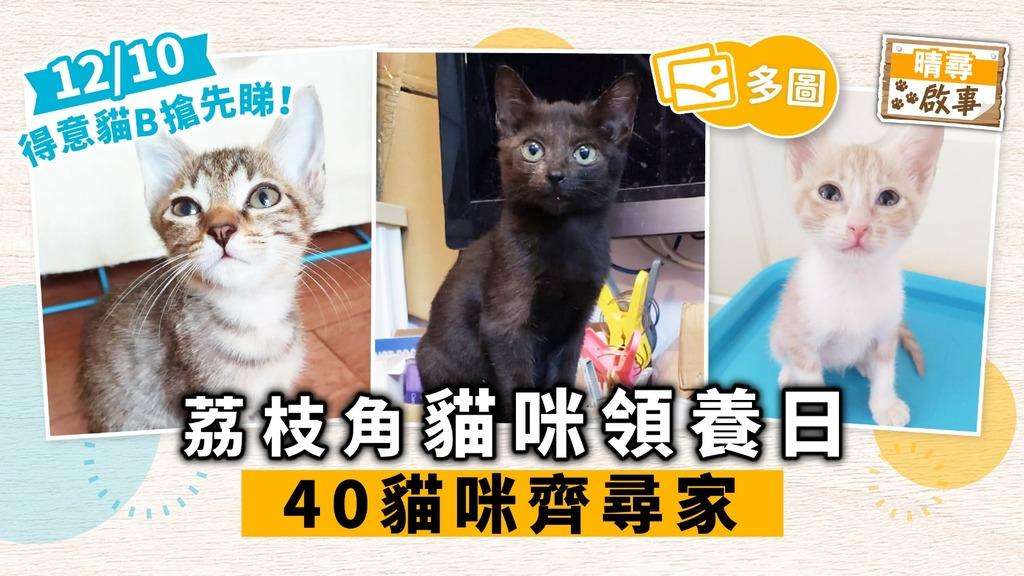 【晴尋啟事】荔枝角周六領養日 40隻貓咪齊尋家 超萌貓搶先睇