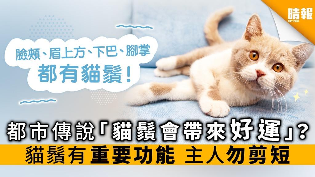 都市傳說「貓鬚會帶來好運」? 貓鬚有重要功能主人勿剪短
