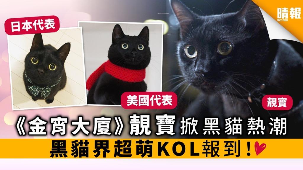 《金宵大廈》靚寶掀黑貓熱潮 黑貓界超萌KOL報到!