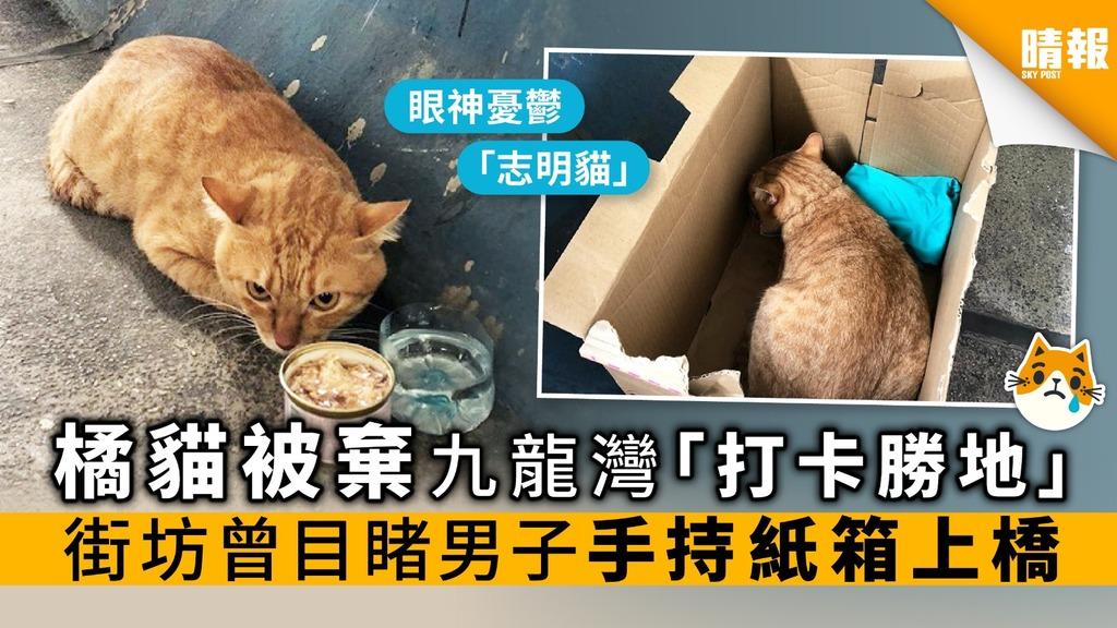 橘貓被棄九龍灣「打卡勝地」 街坊曾目睹男子手持紙箱上橋