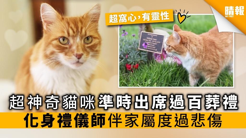 超神奇貓咪 準時出席過百葬禮 化身禮儀師 伴家屬渡過悲傷