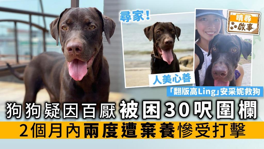 狗狗疑因百厭 被困30呎圍欄 2個月內兩度遭棄養 慘受打擊
