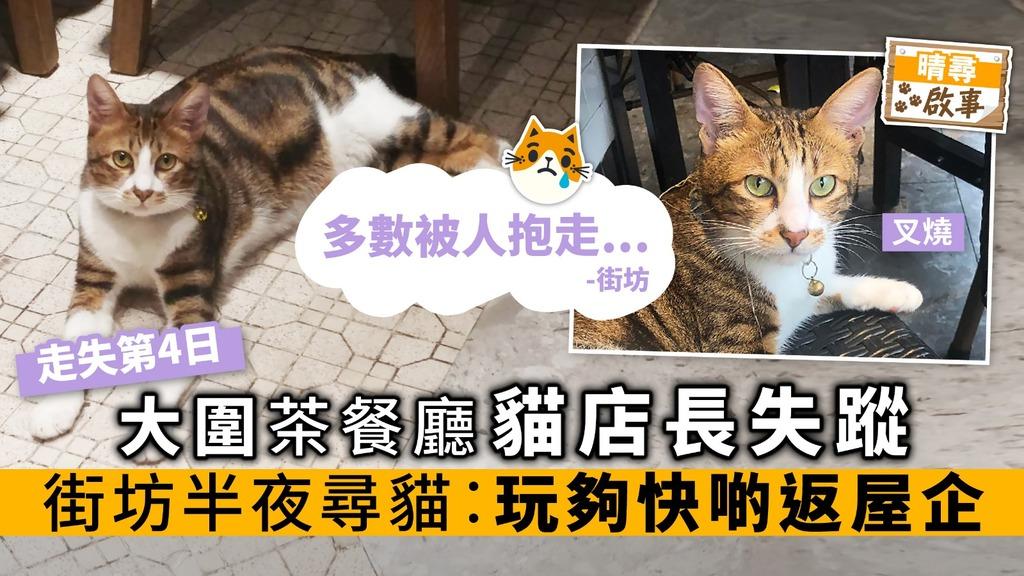 大圍茶餐廳貓店長失蹤 街坊半夜尋貓︰玩夠快啲返屋企