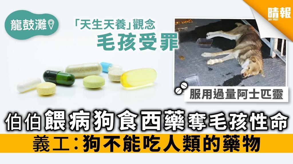 龍鼓灘伯伯餵病狗食西藥奪毛孩性命 義工:狗不能吃人類的藥物