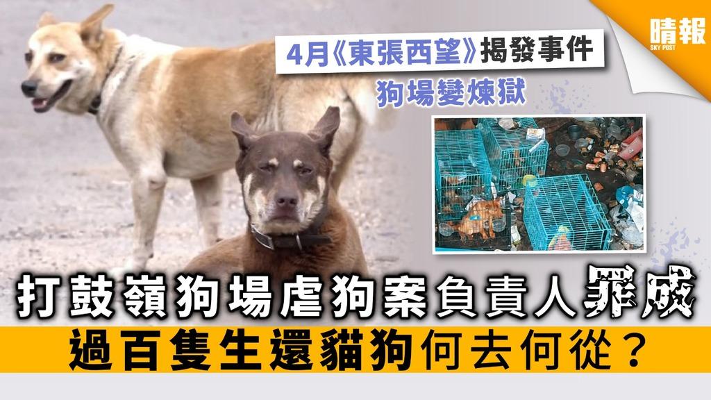 打鼓嶺狗場虐狗案負責人罪成 過百隻生還貓狗何去何從?
