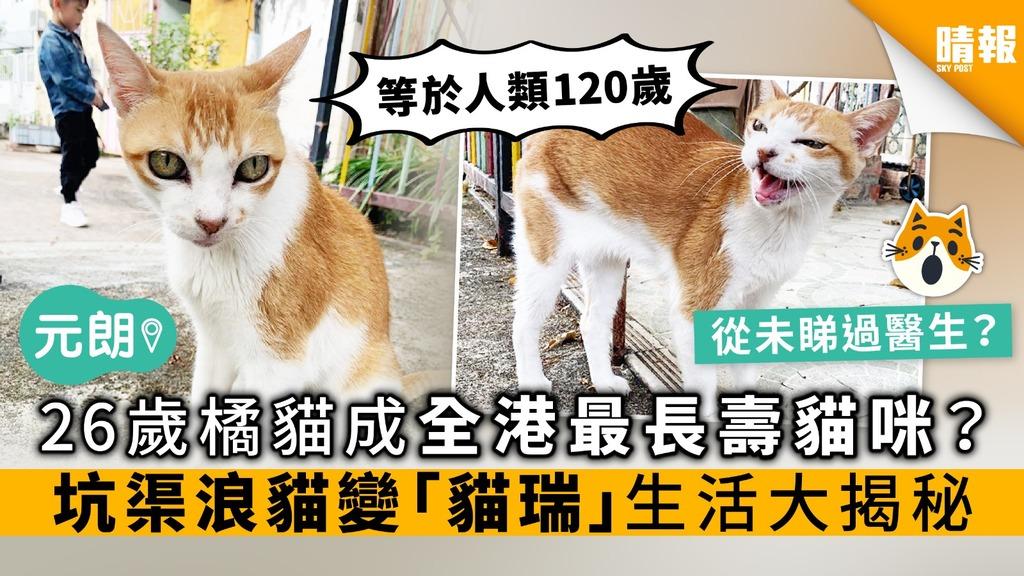 26歲橘貓成全港最長壽貓咪? 坑渠浪貓變「貓瑞」 生活大揭秘
