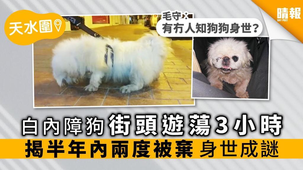 白內障北京狗被棄街頭 遊蕩3小時 揭半年內兩度被棄 身世成謎
