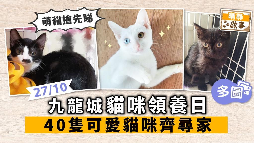 【晴尋啟事】九龍城周日領養日 40隻貓咪齊尋家 超萌貓搶先睇