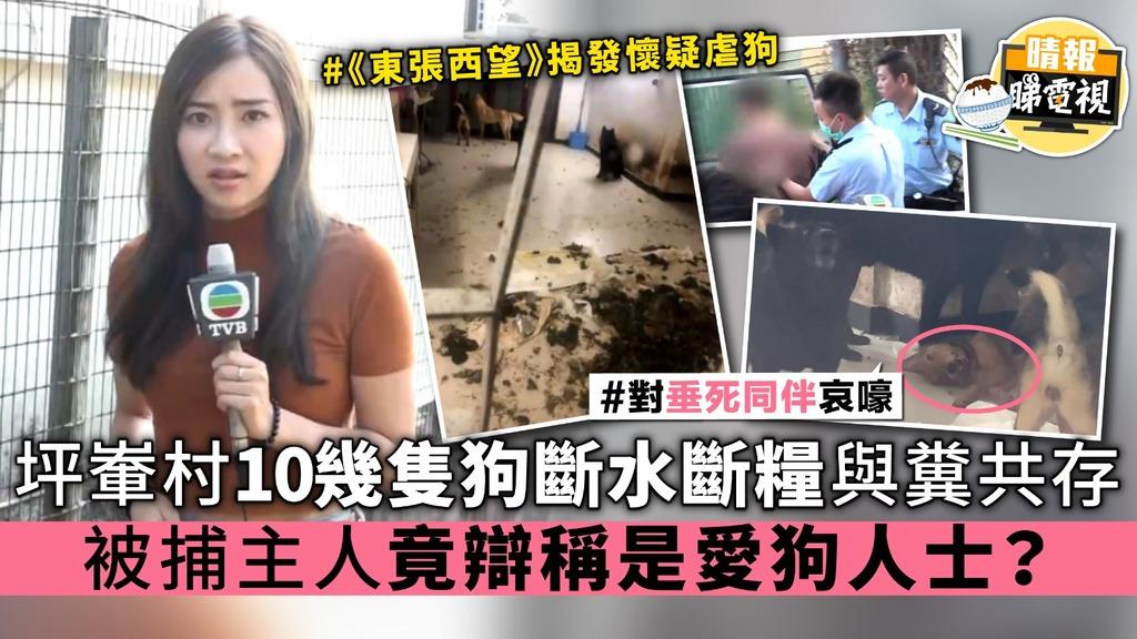 《東張西望》坪輋村10幾隻狗斷水斷糧與糞共存 被捕主人竟辯稱是愛狗人士?