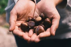 【栗子營養】栗子可以消除疲勞/比香蕉更高鉀!栗子9大營養和好處