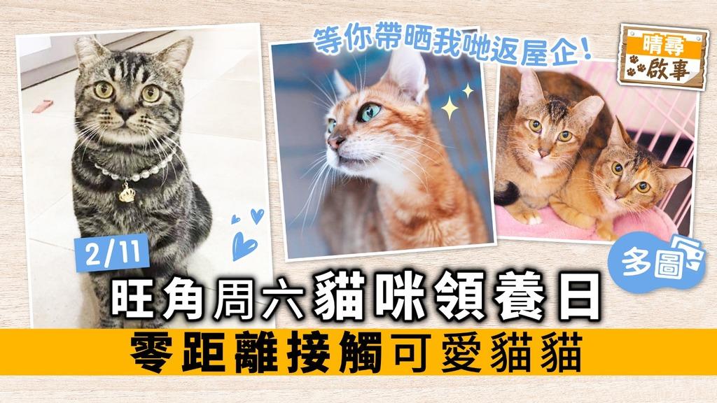 【晴尋啟事】旺角周六貓咪領養日 零距離接觸可愛貓貓