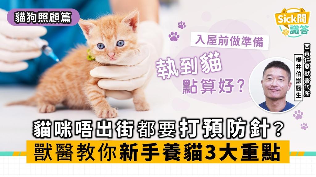 【Sick問識答】貓咪唔出街都要打預防針? 獸醫教你新手養貓3大重點
