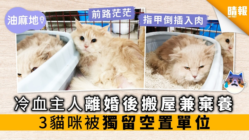 冷血主人離婚後搬屋兼棄養 3貓咪被獨留空置單位