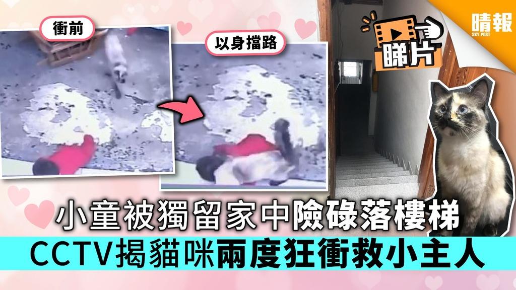 【有片】小童被獨留家中險碌落樓梯 CCTV揭貓咪兩度狂衝救小主人