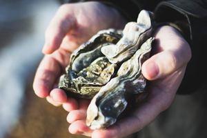 【生蠔】生蠔與牡蠣不同?可以壯陽?關於生蠔8件不可不知的事
