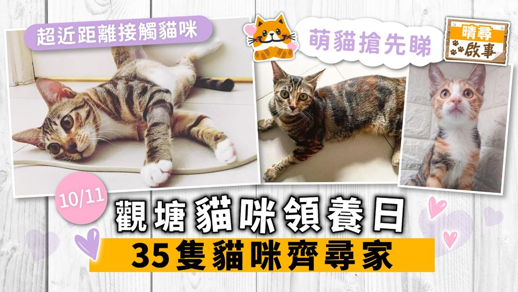 【晴尋啟事】觀塘周日領養日 35隻貓咪齊尋家 超萌貓搶先睇