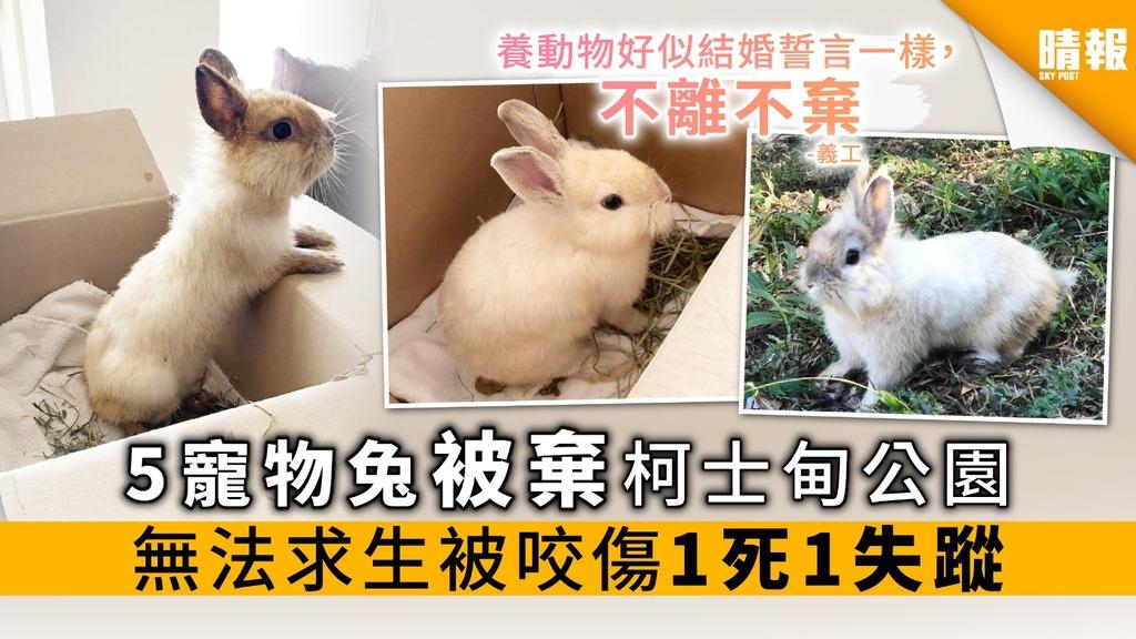5寵物兔被棄柯士甸公園 無法求生被咬傷 1死1失蹤