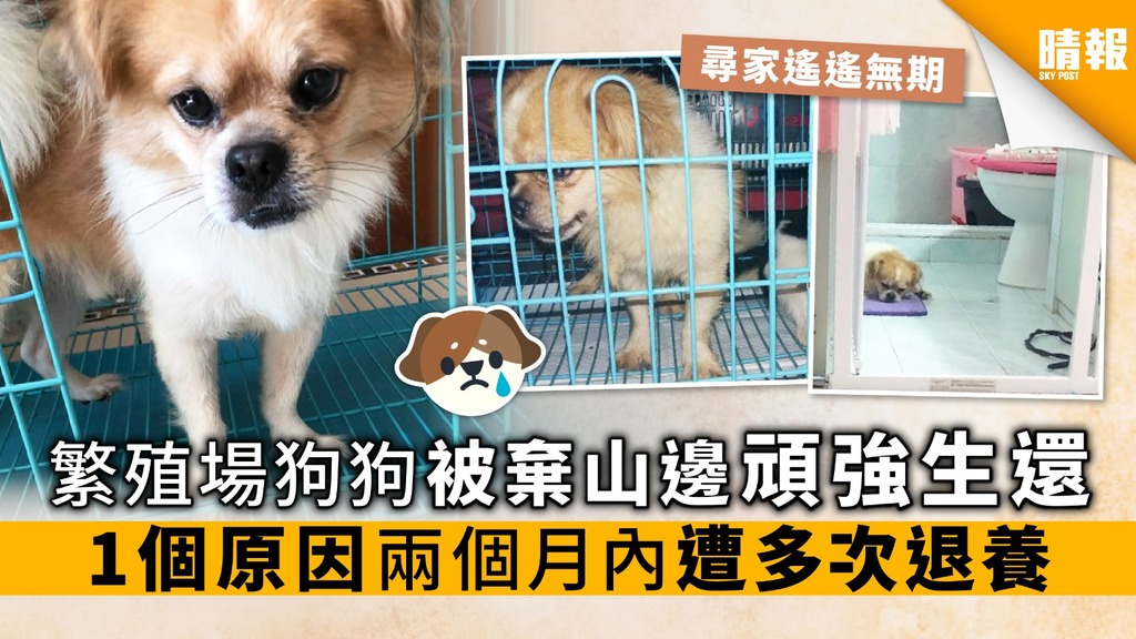 繁殖場狗狗被棄山邊 頑強生還 1個原因 兩個月內遭多次退養