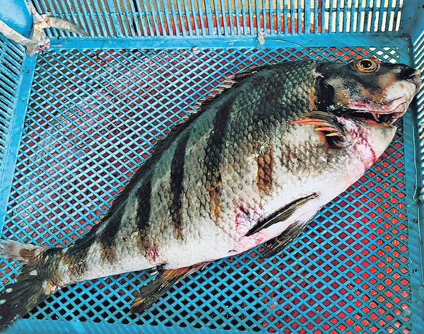 養魚飼料待改良