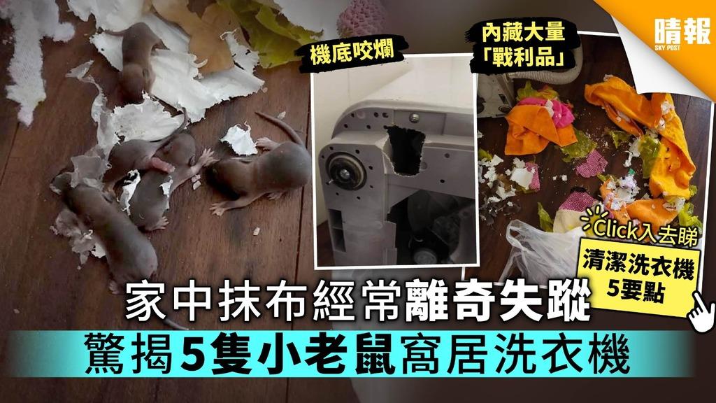 家中抹布經常離奇失蹤 驚揭5隻小老鼠窩居洗衣機