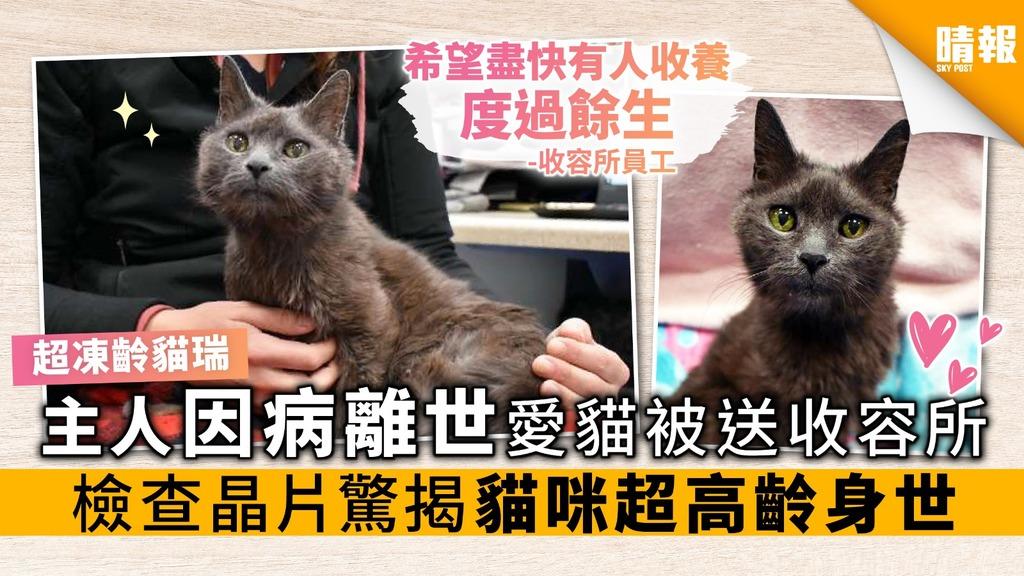 主人因病離世 愛貓被送收容所 檢查晶片驚揭貓咪超高齡身世