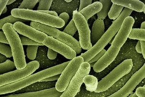 【食物安全】美國蘿蔓生菜疑受大腸桿菌污染 食安中心籲立即停售/切勿進食