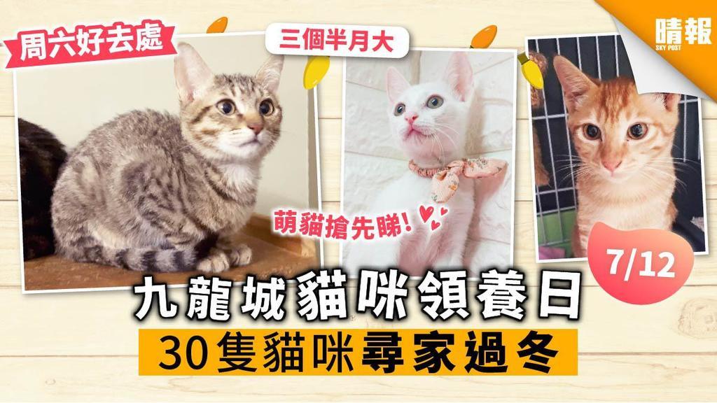 【周六好去處】九龍城領養日 30隻貓咪尋家過冬 超萌貓搶先睇