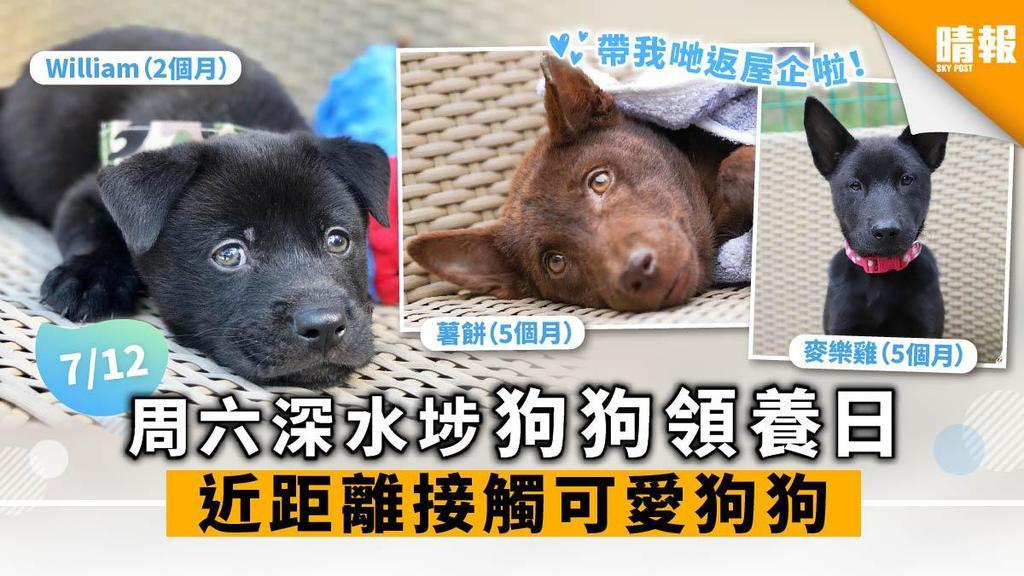 【周六好去處】深水埗狗狗領養日 近距離接觸可愛狗狗