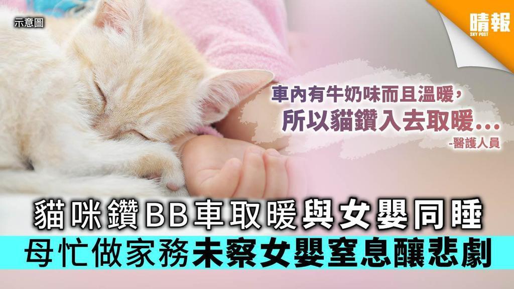 【養貓注意】貓咪鑽BB車取暖與女嬰同睡 母忙做家務未察女嬰窒息釀悲劇