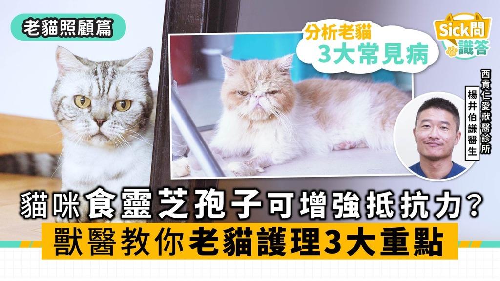 【Sick問識答】貓咪食靈芝孢子可增強抵抗力? 獸醫教你老貓護理3大重點