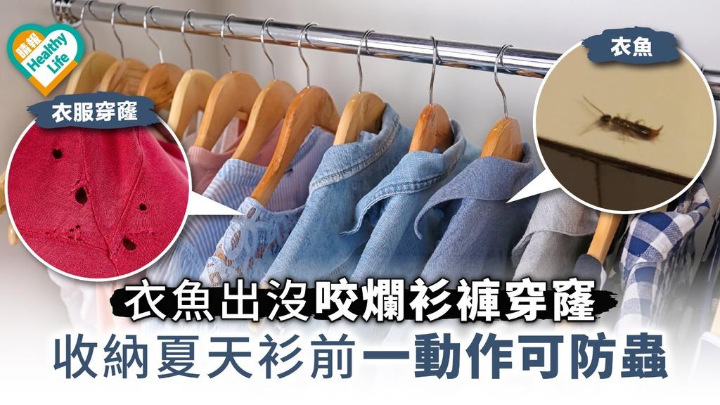 【轉季健康】衣魚咬爛衫褲穿窿 收納夏天衫前一動作可防蟲