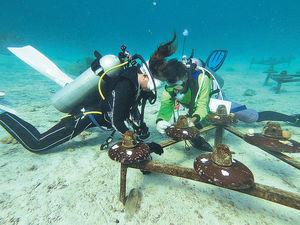遊泰國布吉 潛水兼助珊瑚重生