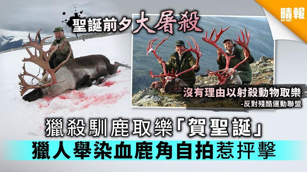 【聖誕悲劇】獵殺馴鹿取樂「賀聖誕」 獵人舉染血鹿角自拍惹抨擊