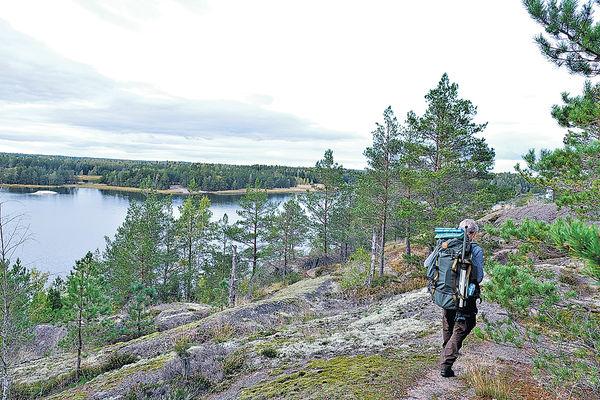 芬蘭森林 野生動物攝影遊