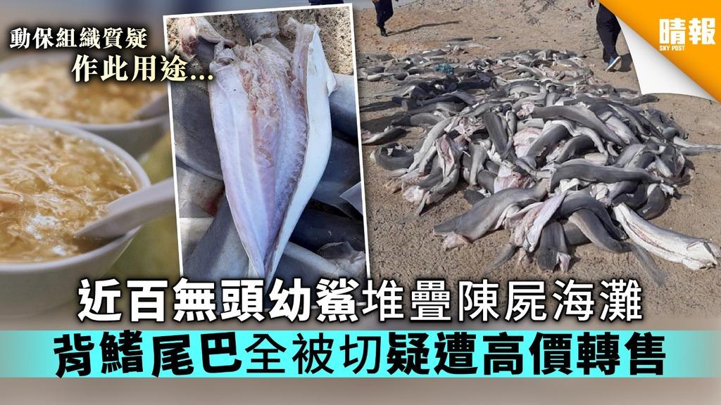 【魚翅的代價】近百無頭幼鯊堆疊陳屍海灘 背鰭尾巴全被切疑被高價轉售