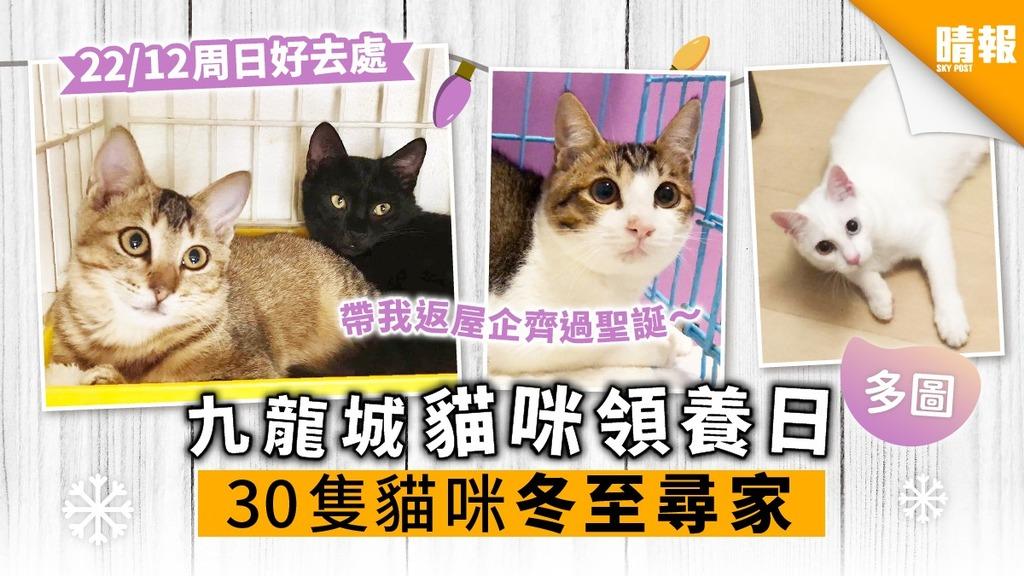 【周日好去處】九龍城領養日 30隻貓咪冬至尋家 超萌貓搶先睇