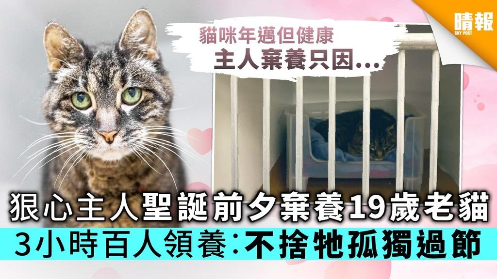 狠心主人聖誕前夕棄養19歲老貓 3小時百人欲領養︰不捨牠孤獨過節