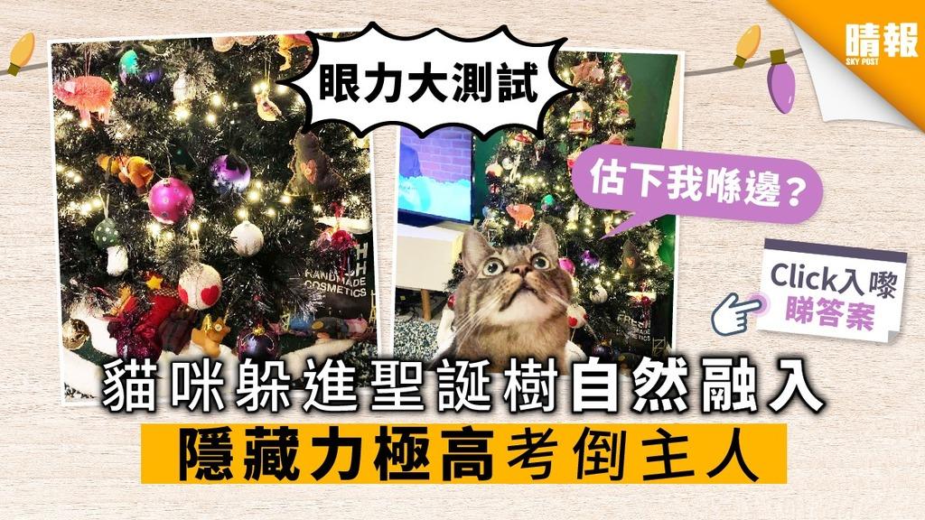 【眼力大測試】貓咪躲進聖誕樹自然融入 隱藏力極高考倒主人
