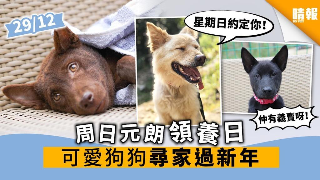 【周日好去處】元朗領養日可愛狗狗尋家過新年