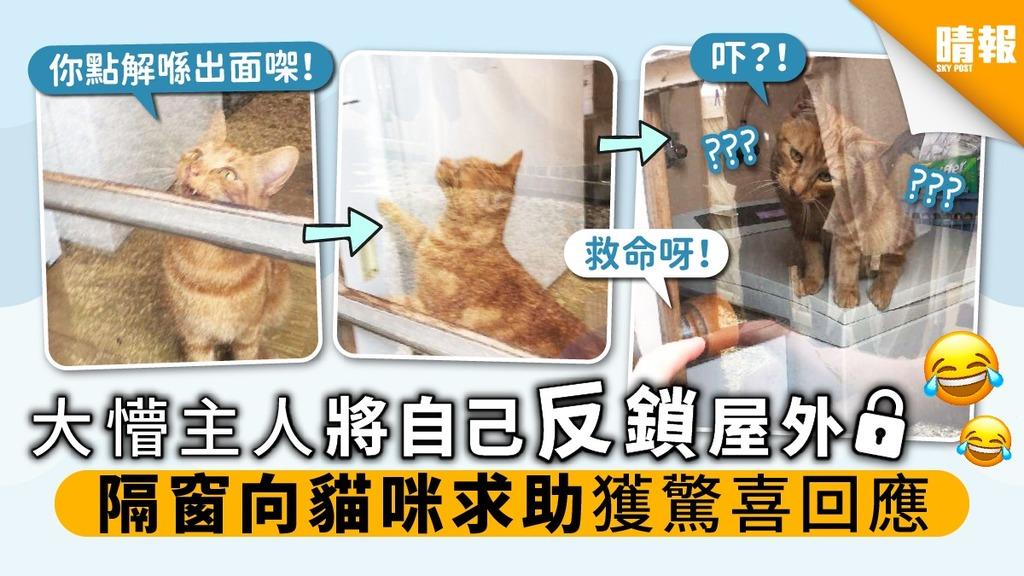 大懵主人將自己反鎖屋外 隔窗向貓咪求助獲驚喜回應