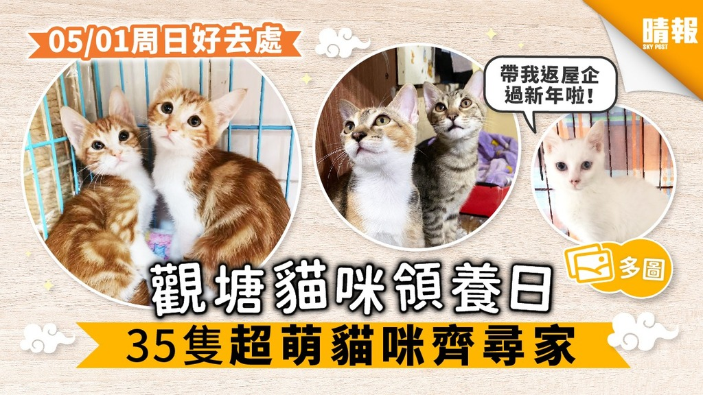 【周日好去處】觀塘領養日 35隻貓咪尋家過年 超萌貓搶先睇