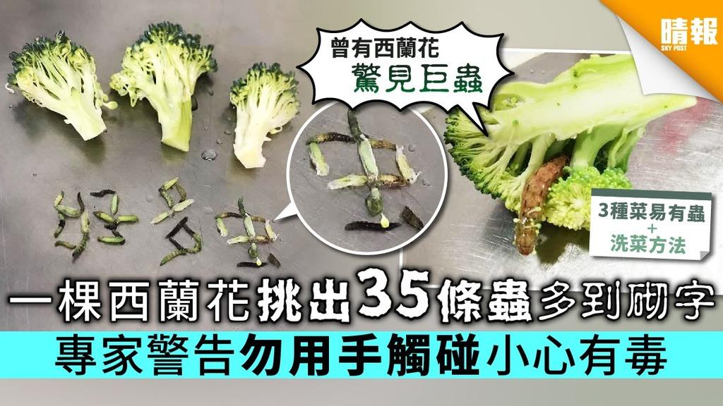 一棵西蘭花挑出35條蟲多到砌字 專家警告勿用手觸碰小心有毒【附洗菜方法】