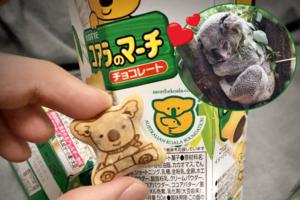 【澳洲山火樹熊】26年來一直默默捐錢澳洲樹熊基金! 日本網民呼籲買「樂天熊仔餅」救澳洲樹熊