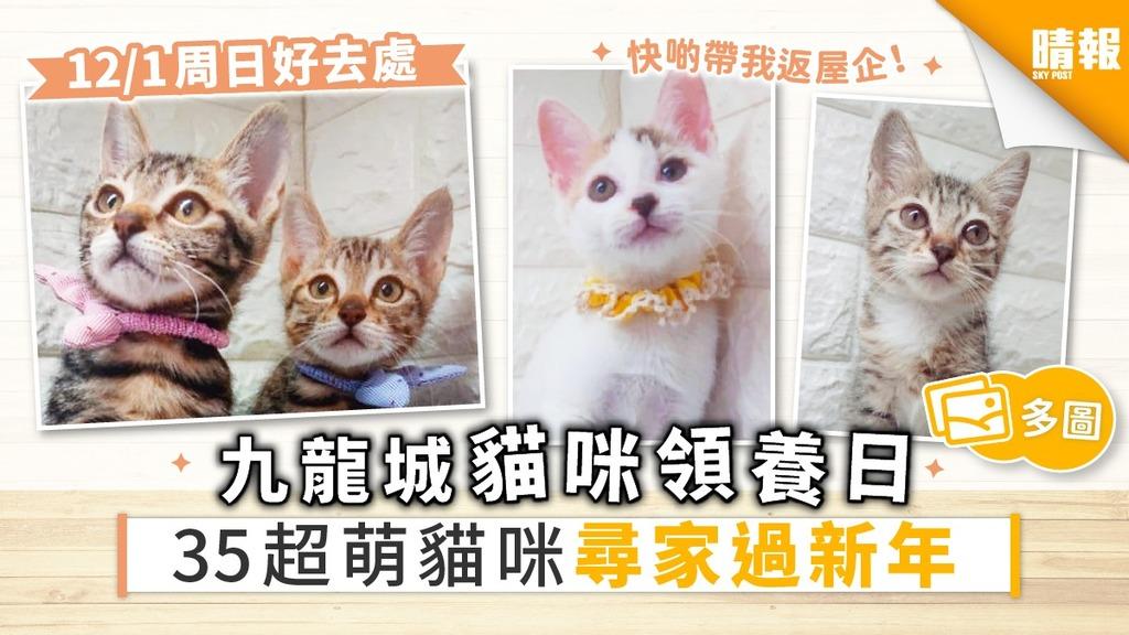 【周日好去處】九龍城領養日 35隻貓咪尋家過年 超萌貓搶先睇
