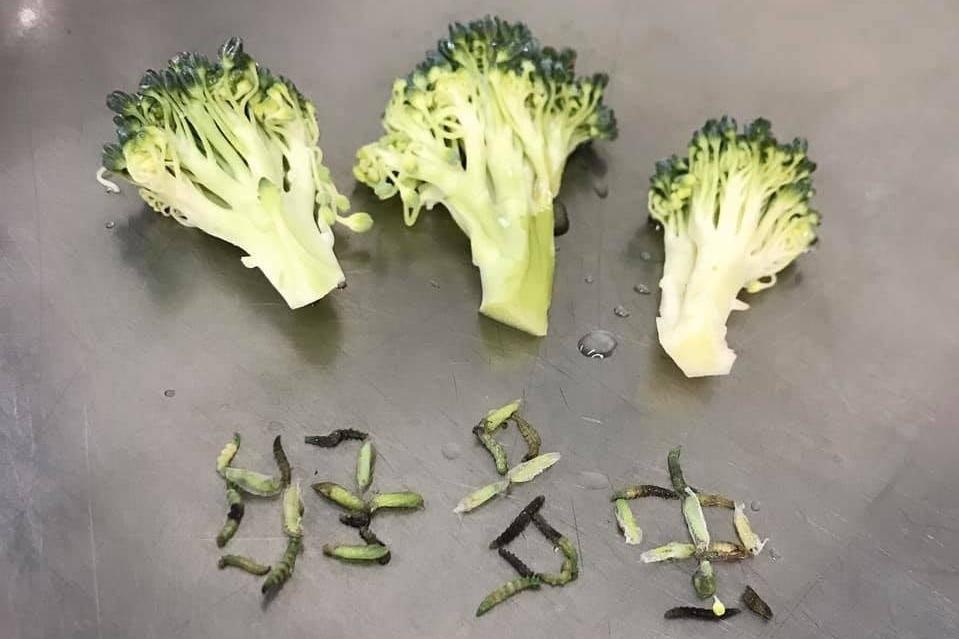 【洗蔬菜】一棵西蘭花驚見35條菜蟲!教你正確清洗西蘭花方法去除農藥菜蟲