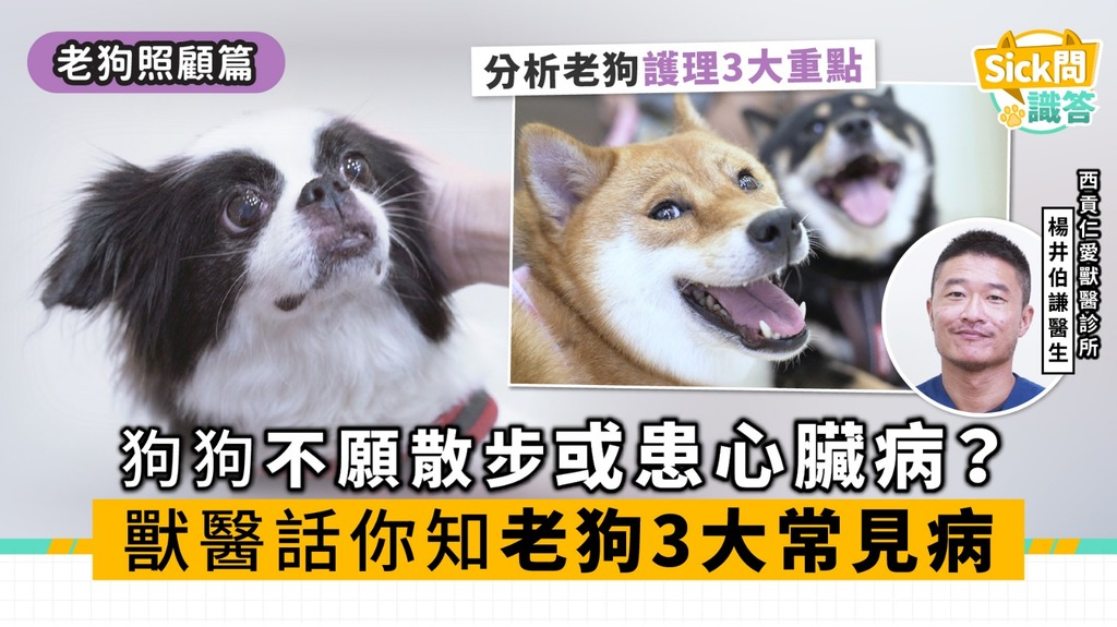 【Sick問識答】狗狗不願散步或患心臟病? 獸醫話你知老狗3大常見病