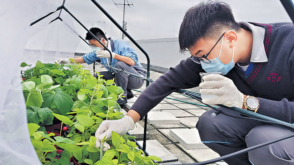 中學生種大豆 活學生物科