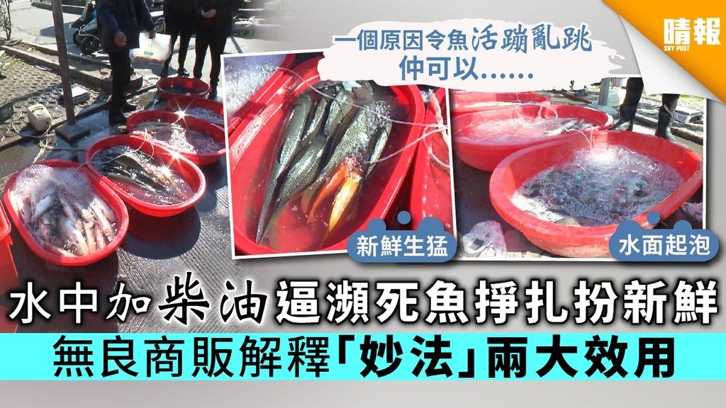 【食物安全】水中加柴油逼瀕死魚掙扎扮新鮮 無良商販解釋「妙法」兩大效用
