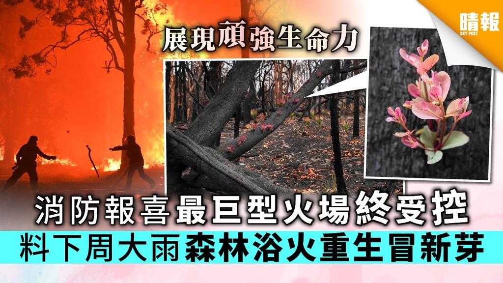【澳洲山火】消防報喜最巨型火場終受控 料下周大雨森林浴火重生冒新芽