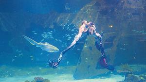 布吉水族館 美人魚陪你共享晚餐